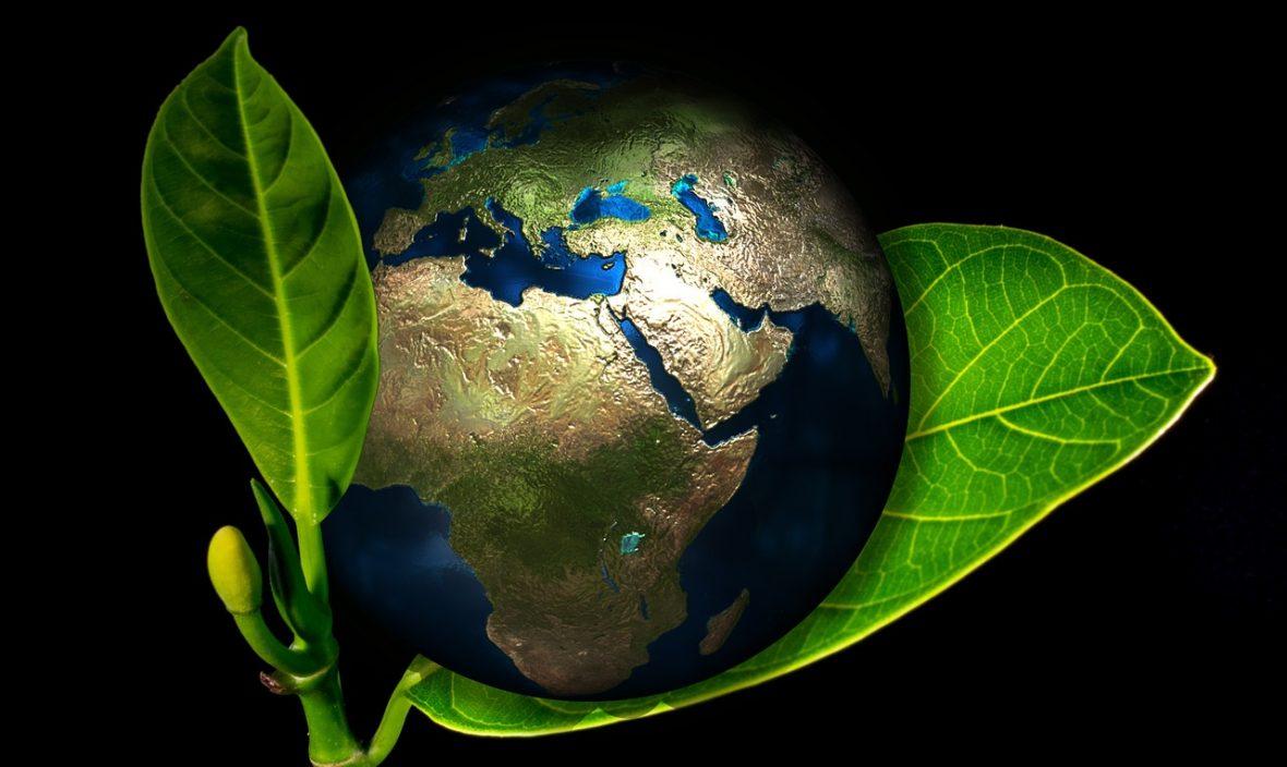 earth in leaf